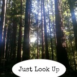 Just Look Up