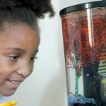 {Saturday Sights} Meet Sparkle The Betta Fish